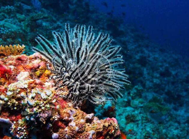 Amazing Caribbean Underwater Photoshoot